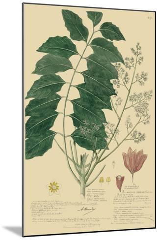Descubes Tropical Botanical III-A^ Descubes-Mounted Giclee Print