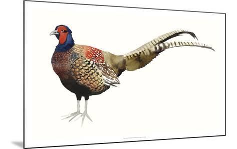 Watercolor Pheasant II-Grace Popp-Mounted Giclee Print