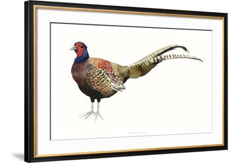 Watercolor Pheasant II-Grace Popp-Framed Art Print