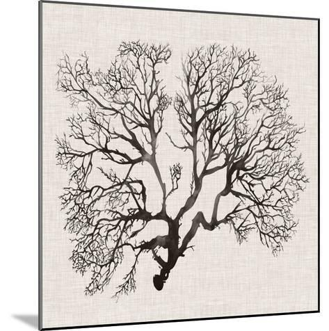 Shadow Sea Fan III-Grace Popp-Mounted Art Print