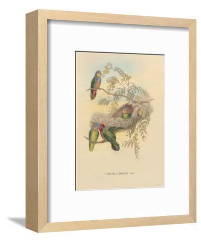 Bruijns Pygmy Parrots (Nasiterna Bruijnii, Salvad)-John Gould-Framed Art Print