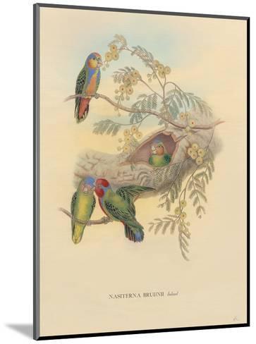 Bruijns Pygmy Parrots (Nasiterna Bruijnii, Salvad)-John Gould-Mounted Art Print