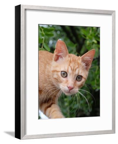 Lovely Red Cat Animal-Wonderful Dream-Framed Art Print