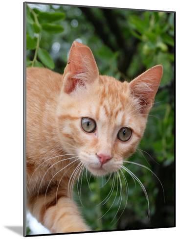 Lovely Red Cat Animal-Wonderful Dream-Mounted Art Print
