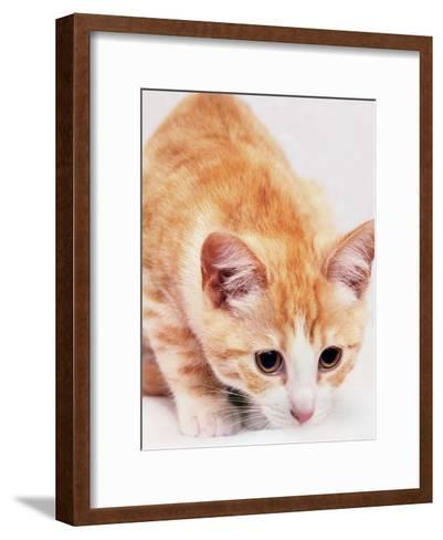 Red Cute Cat Pet Friend-Wonderful Dream-Framed Art Print