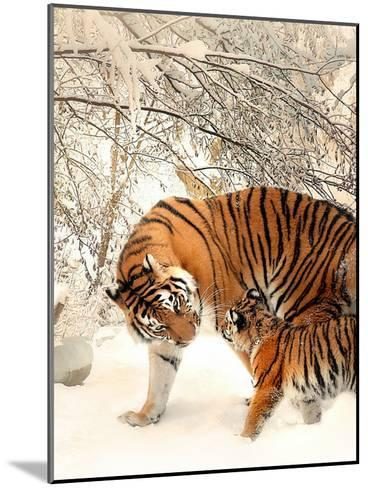 Tiger Family In The Snow-Wonderful Dream-Mounted Art Print