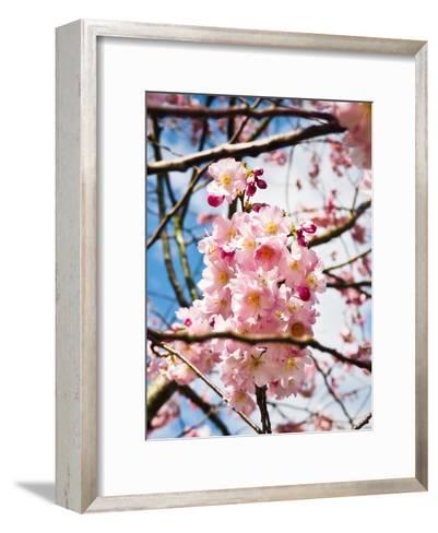 Asia Cherry Blossom-Wonderful Dream-Framed Art Print