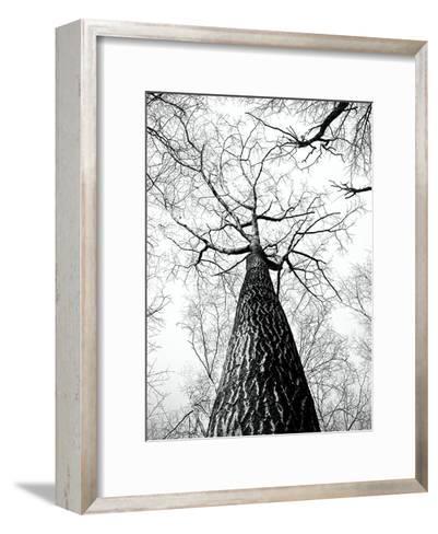 Branches Tree Nature Landscape-Wonderful Dream-Framed Art Print