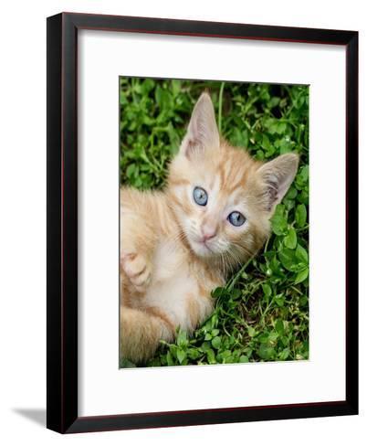 Kitten Pet Cat Animal-Wonderful Dream-Framed Art Print