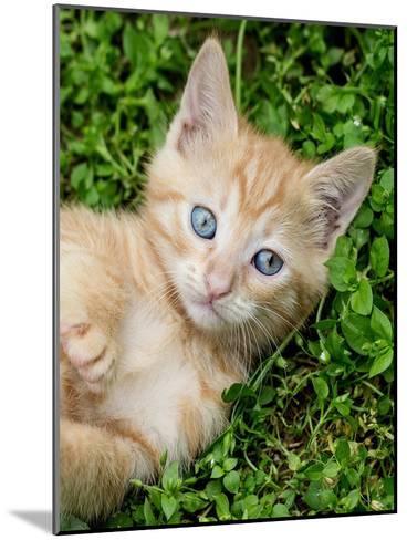 Kitten Pet Cat Animal-Wonderful Dream-Mounted Art Print