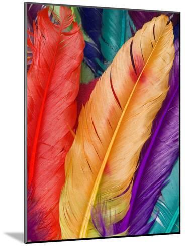 Colorful Bird Feather-Wonderful Dream-Mounted Art Print