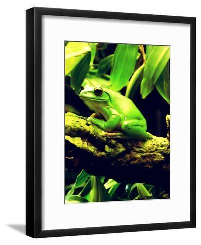 Green Wildlife Frog Animal-Wonderful Dream-Framed Art Print