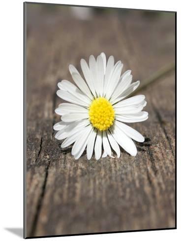 Daisy Flower On The Floor-Wonderful Dream-Mounted Art Print