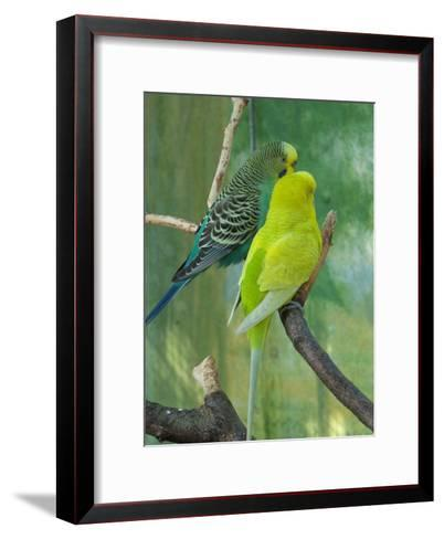 Budgie In The Nature-Wonderful Dream-Framed Art Print