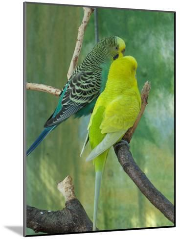 Budgie In The Nature-Wonderful Dream-Mounted Art Print
