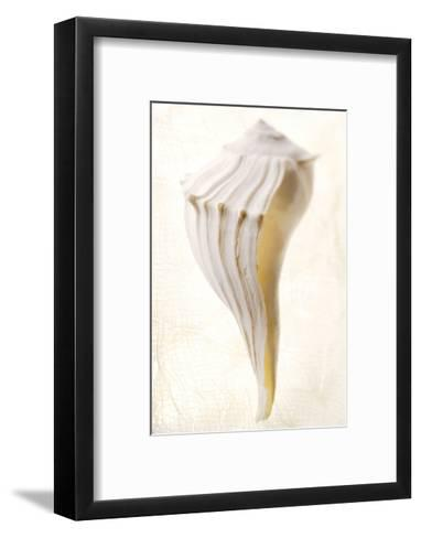 Great White Shell-Glen and Gayle Wans-Framed Art Print
