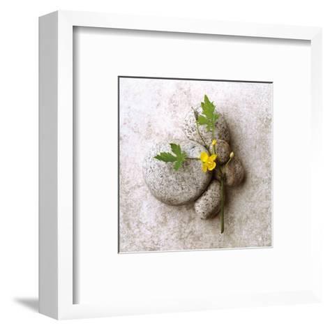 Poppy On Stone-Glen and Gayle Wans-Framed Art Print