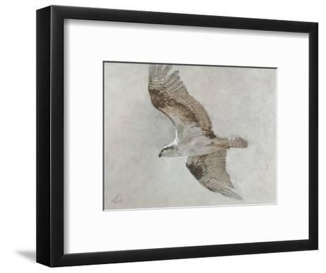Searching Osprey-Todd Telander-Framed Art Print