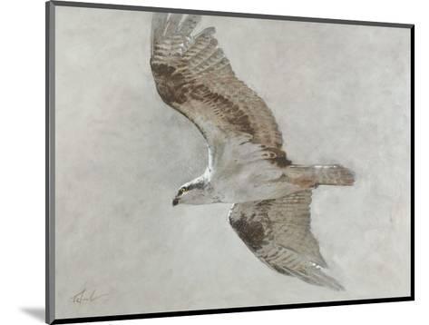 Searching Osprey-Todd Telander-Mounted Art Print