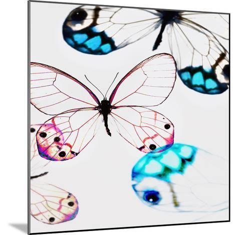 Glasswings-Tracey Telik-Mounted Art Print