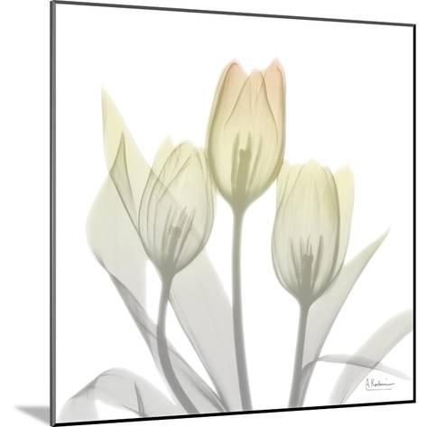 Sunday Morning Tulips Two-Albert Koetsier-Mounted Art Print