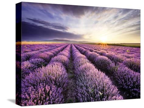 Lavender Sunrise--Stretched Canvas Print