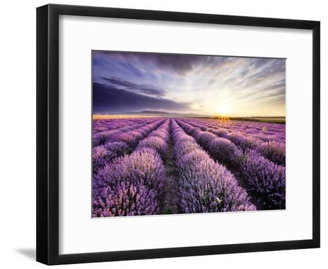Lavender Sunrise--Framed Art Print