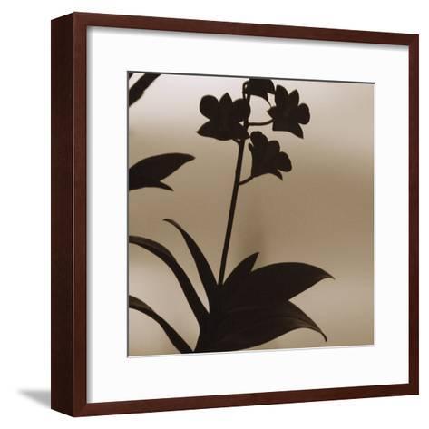 Exotica I-Tony Koukos-Framed Art Print
