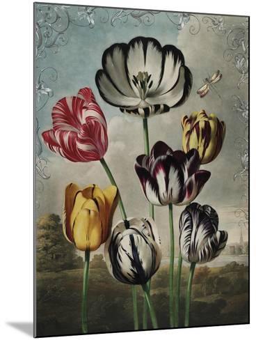 Ornamental - Thierry-Stephanie Monahan-Mounted Giclee Print