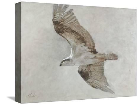 Searching Osprey-Todd Telander-Stretched Canvas Print