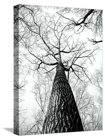 Branches Tree Nature Landscape-Wonderful Dream-Stretched Canvas Print