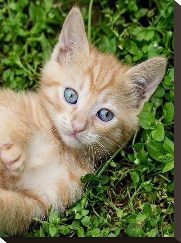 Kitten Pet Cat Animal-Wonderful Dream-Stretched Canvas Print