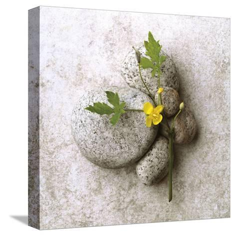 Poppy On Stone-Glen and Gayle Wans-Stretched Canvas Print
