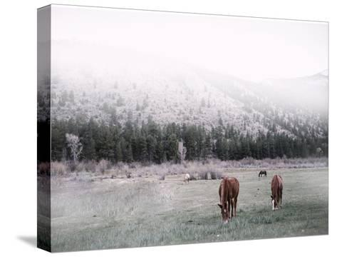 Grazing-Cynthia Alvarez-Stretched Canvas Print