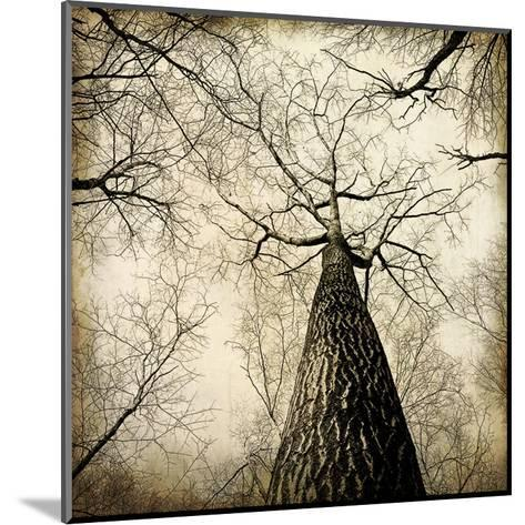 Enchanted Forest 2-Kimberly Allen-Mounted Art Print
