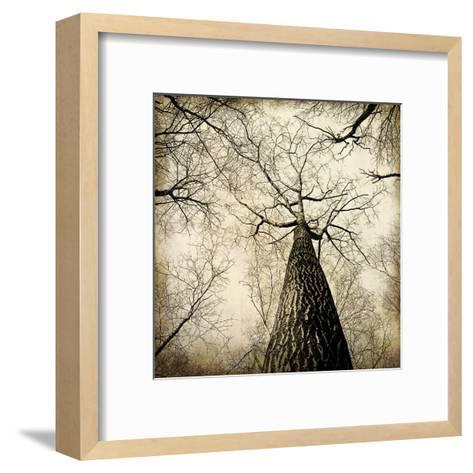 Enchanted Forest 2-Kimberly Allen-Framed Art Print