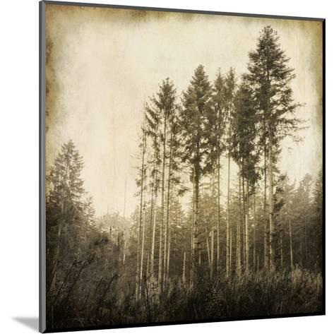 Enchanted Forest 3-Kimberly Allen-Mounted Art Print
