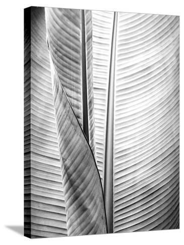 Metal BW Plant 1-Kimberly Allen-Stretched Canvas Print