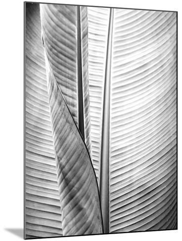 Metal BW Plant 1-Kimberly Allen-Mounted Art Print