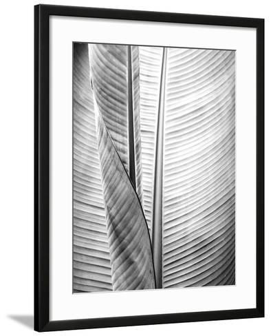 Metal BW Plant 1-Kimberly Allen-Framed Art Print