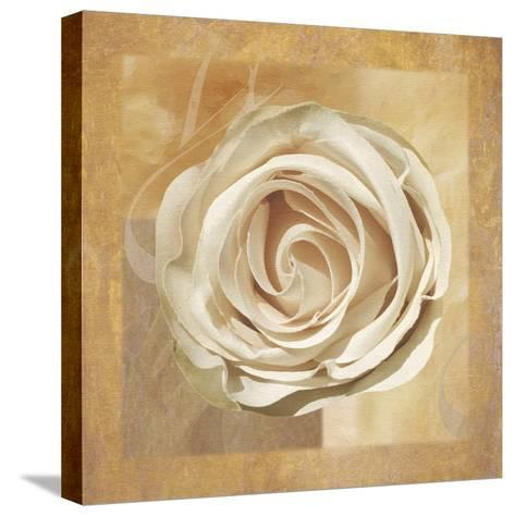 Warm Rose II-Lucy Meadows-Stretched Canvas Print