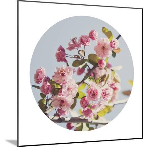 Spring Morning - Sphere-Irene Suchocki-Mounted Giclee Print