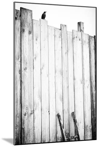 freed-J?rgen Hartlieb-Mounted Art Print