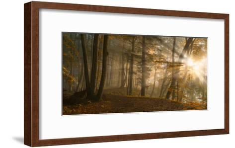 Forest Light-Norbert Maier-Framed Art Print