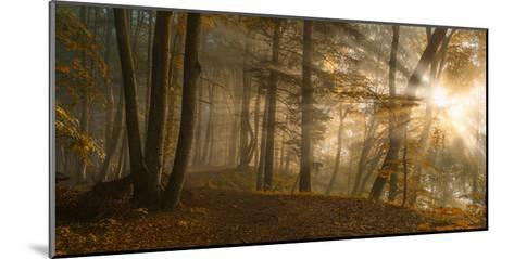 Forest Light-Norbert Maier-Mounted Art Print