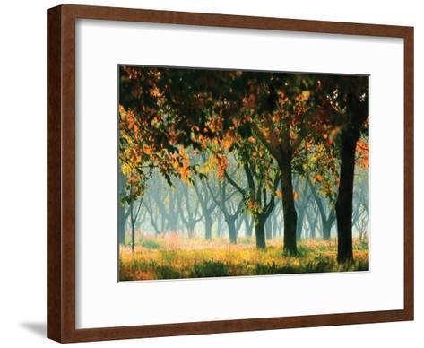 Fall Forest- Zsolnai-Framed Art Print