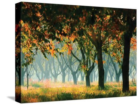 Fall Forest- Zsolnai-Stretched Canvas Print