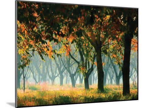 Fall Forest- Zsolnai-Mounted Art Print
