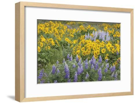 Balsamroot and Lupine 3-Don Paulson-Framed Art Print