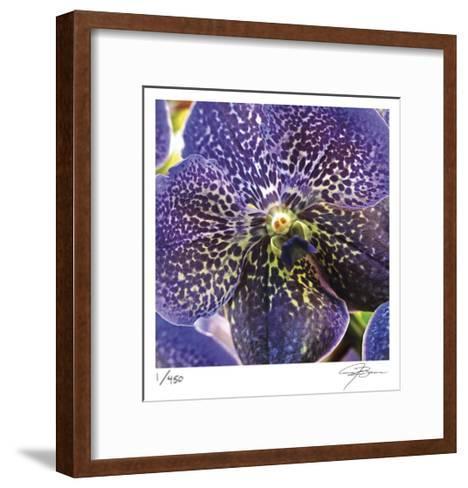 Orchid Square-Ken Bremer-Framed Art Print
